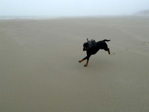 Op het strand is altijd wat te doen #lovemydog