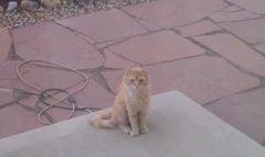 Do you believe we have a Backyard intruder? The nerve of this kitty!