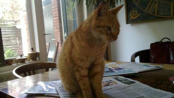 Ah, wat een lief slim mager katje! Ruikt zelfs nog naar de stal #2demazzelkat #goedwerk
