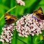 Vlinders op een bloem #buienradar