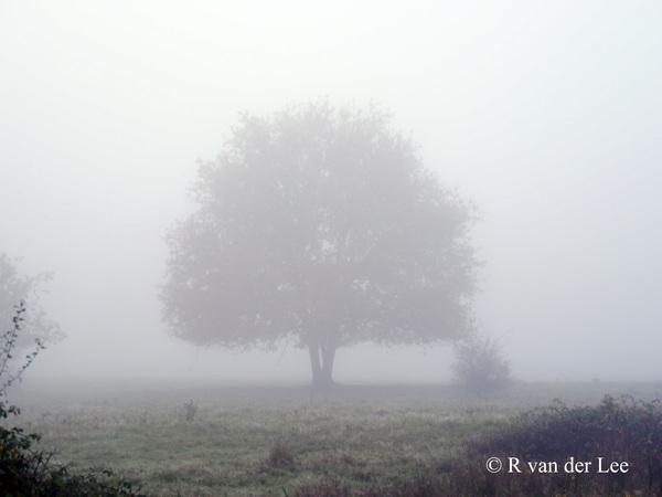 Mist in de Maashorst om 07.00 uur nabij Uden #buienradar