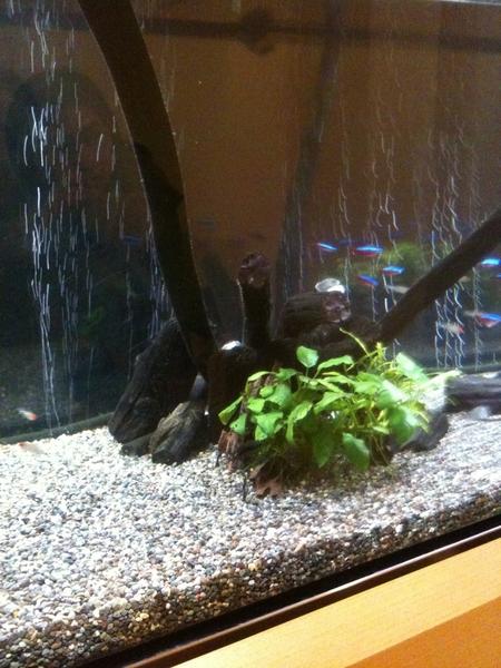 銀座掌さんの三階。魚の入った水槽にも備長炭が入っています。魚も健康になるのか!?