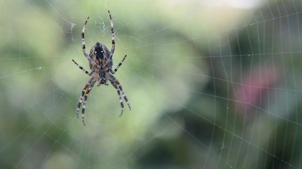 Het is weer tijd voor de #spin