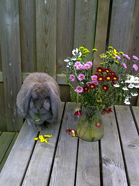 Konijn en bloemen. Slechte combinatie. Cc: @sabrinaloont