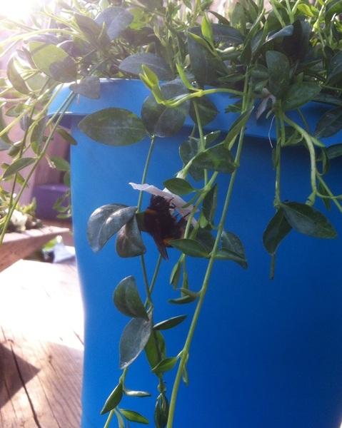 De bloemetjes en de bijtjes ehh hommels