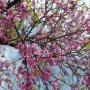 We hebben alvast een zonnige zaterdag, en met de Pinksterdagen??? #buienradar