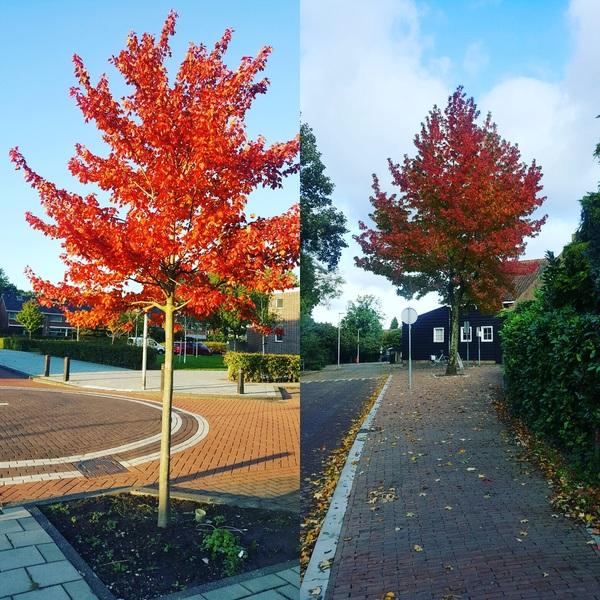 Mooie kreuren te zien op straat. Het is te zien dat de herfst in is al enige tijd.  #buienradar
