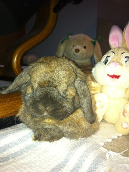 @RufusRabbit me too. Did you see me with my girls?