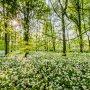 Daslook, Polderpark Cronesteyn. #lente #natuur #actueel #buienradar