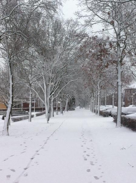 De sneeuw zorgt wel voor mooie plaatjes! In Veenendaal is het wit. #buienradar
