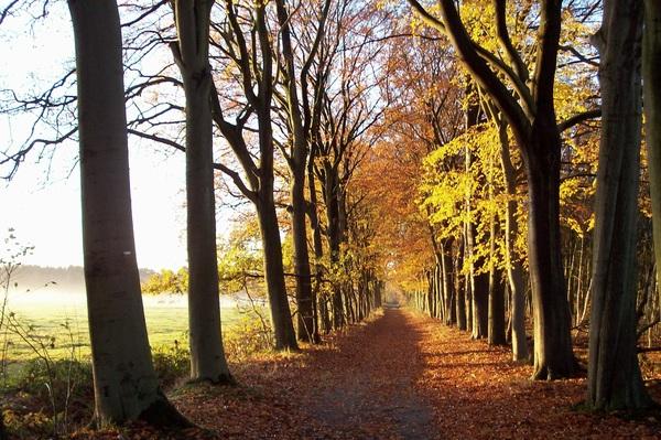 Bergen op Zoom, Zoomland, 24-11 #buienradar
