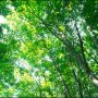 Tree Surveys, Health, Safety & Arboriculture - Landvision