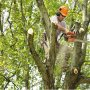 Tree Trimming by Honolulu Tree Service