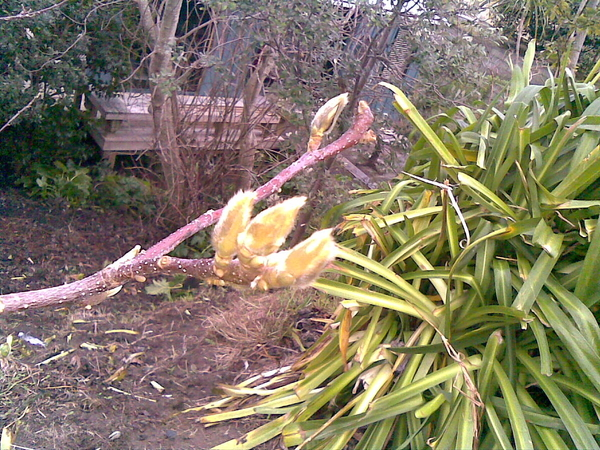 Misguided tree budding already