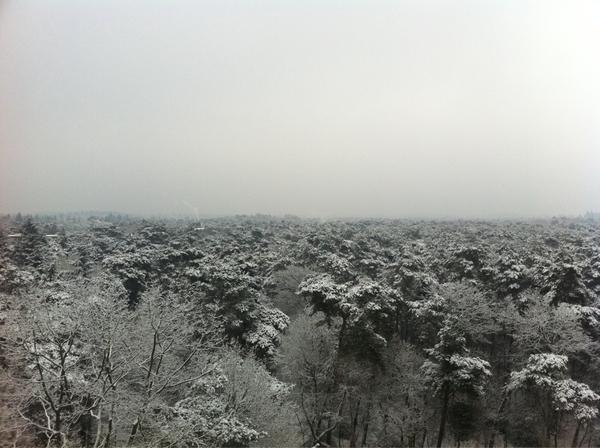 Welke kant ik ook uitkijk, een bos met een topping van sneeuw ziet er te gek uit!