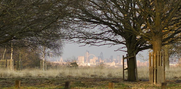 St Pauls and London Eye from #RichmondPark (50mm lens) #London
