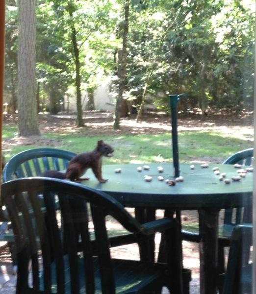 Eekhoorntje op onze tuintafel