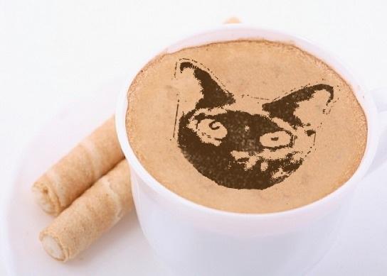 #nipclub Purrrr Latte art. @kingtuttifruiti @thenascarkitty