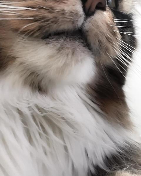 #😻 #tokyo #beautifultime #catstagram #cat #selfie #cozy #room #🎉 #dailypic
