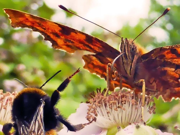 Scheer je weg, dit is mijn bloem! #vlinder #bloem #bij #natuur