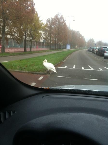Even wachten op de overstekende voetganger...