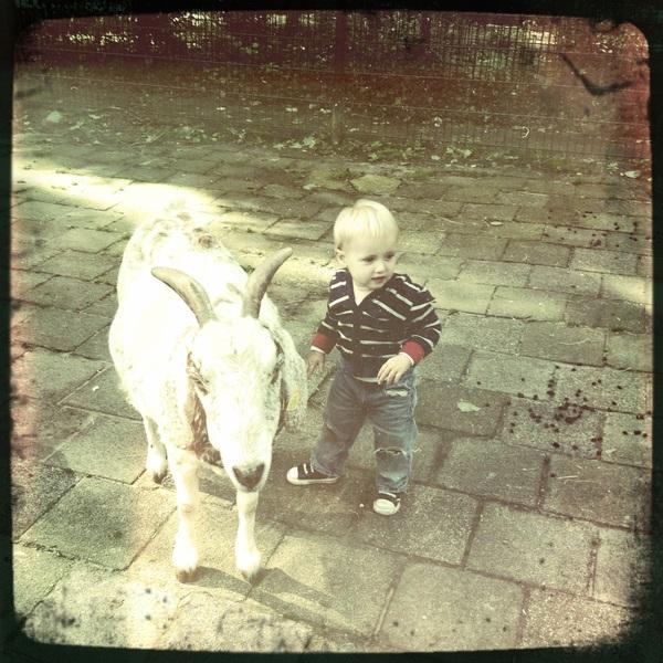 Fletcher of the day: neighborhood goat