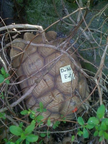 Morris the turtle