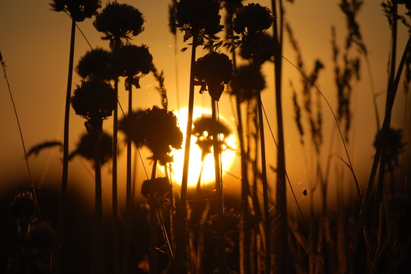 Ondergaande zon in Zoetermeer, Zuid-Holland.  #buienradar