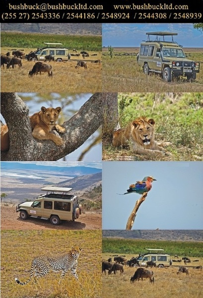 Safari Holidays Tour Service & Travel Agencies in Tanzania