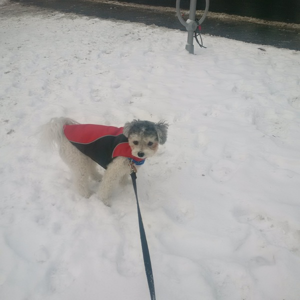 Dante's in awe of the #snow! #letitsnow #leashandpaws #cutie #tistheseason #tgif