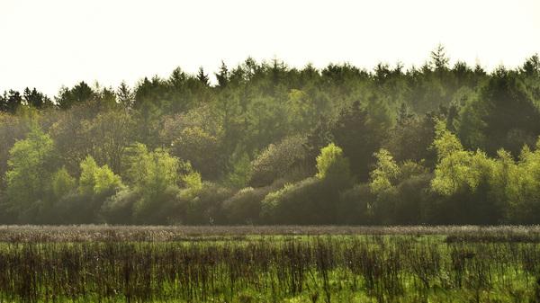 Vijftig tinten groen. (Zon beschijnt, over bosrand heen, de bomen aan deze bosrand) 13 april 2014 #buienradar