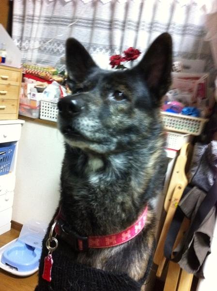 珍しく、顔がはっきりわかる写真!  #dog