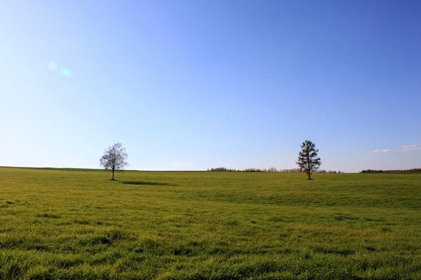 永遠の草原