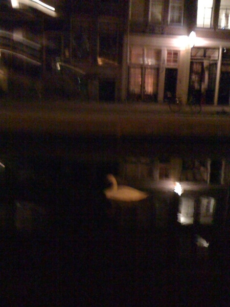 Night swan swimming in front of our house...