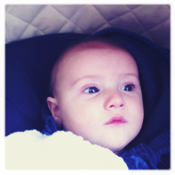 Fletcher of the day: looking out the window.