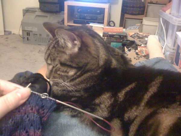 Knitting, watching #secretmillionaire and being kept warm by Pixel. #mobypic crashes if I try to post this.