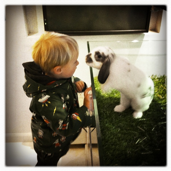 Fletcher of the day: Jack the Rabbit