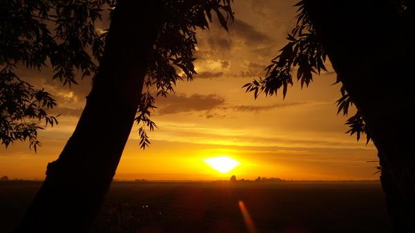 Een oer hollandse wilg doet bij dit soort zonsondergangen niets onder voor een palmboom . Vanuit het zonnige zuiden des vaderlands de Heen #buienradar