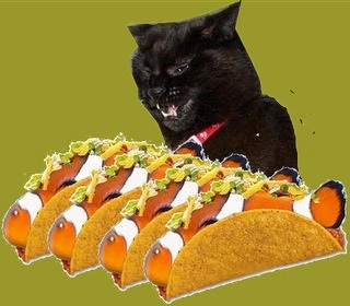 @whskr You look like @sisfurcats Chilipepper's favorite Tacos.  #dannypawty