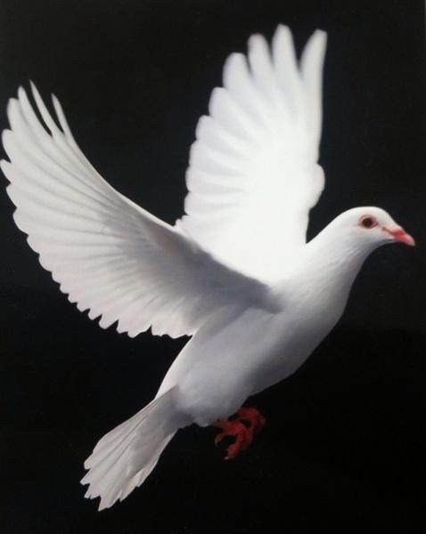 幸せになりなさいってメッセージと共に、白い鳩の写真が送られて来ました。がんばります!
