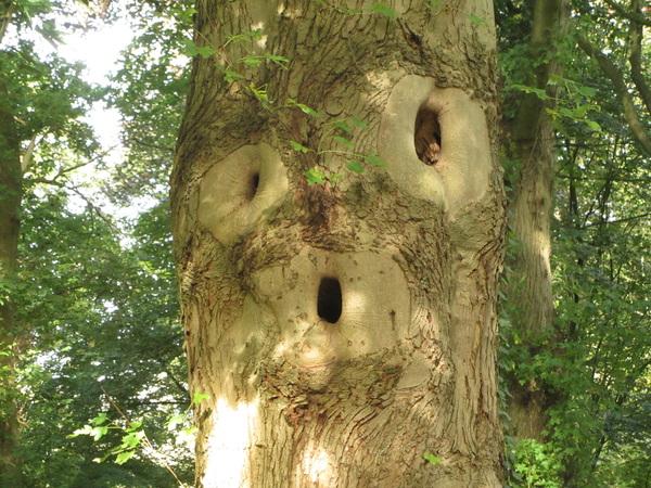 Wij waren gisteren in het boze bomen bos :)