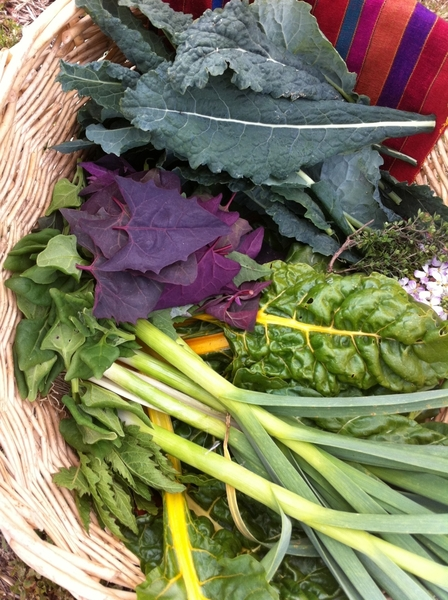 Rancho La Puerta: collected green garlic, herbs, flowers & 4 kinds of greens to cook with!  I'm in heaven!