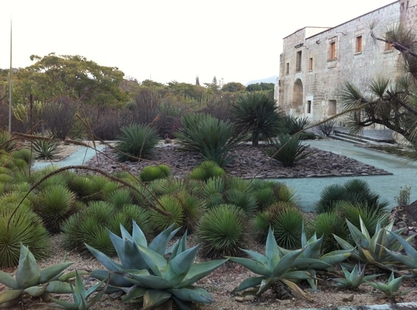 Tour of Oaxaca Ethnobotanical gardens, treasure of Mexico. Only native plants (incl medicinal & culinary)