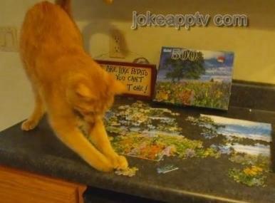cat does puzzle