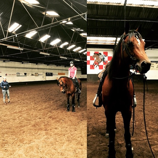 Had a very nice training today with my new friend! We are ready for Saturday, competition day! #letsdoit #training #reining #NK #Schijndel