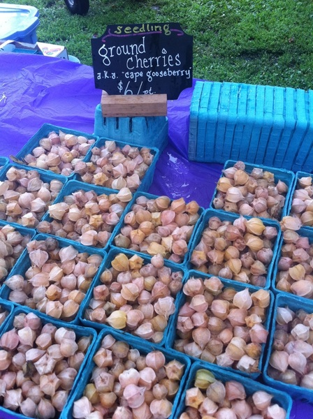 Wicker Park Farmers Mkt: Seedling has great ground cherries. I'm buying them for a tart tonight.