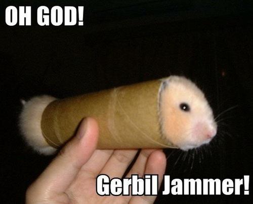 gerbil stuck in anus