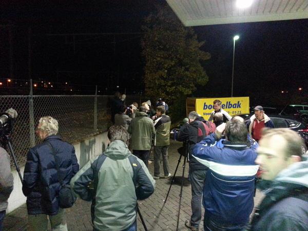 Zwolle het walhalla voor de spotters.... De #sperweruil is gespot... :)