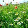 Mooi bloeiend veld op een zonnige woensdagmiddag #buienradar