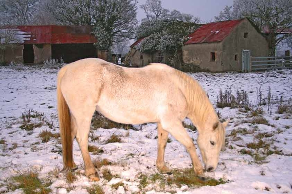 """As a White Gold Horse in the Snow"""